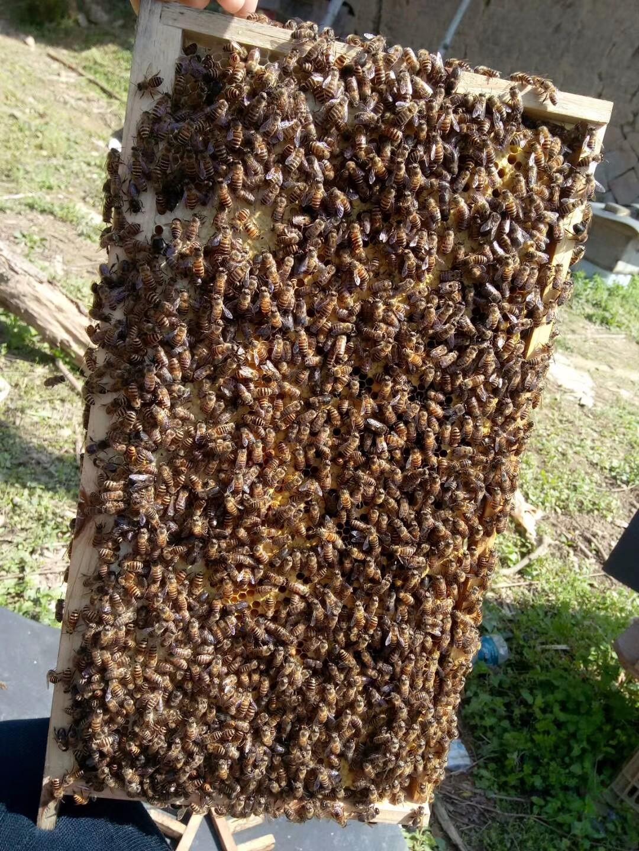纯天然0添加土蜂蜜