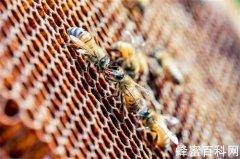 非成熟蜜到底是不是真<em>蜂蜜</em>?