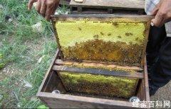 帮您减少买到假蜂蜜的<em>机</em>率