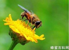 <em>蜜蜂</em><em>是</em><em>怎么</em>采花的呢?