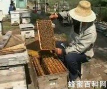 养蜂业前景可观 必将成为朝阳产业