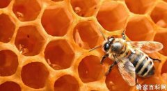 寶寶吃蜂蜜里面暗藏大學問