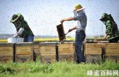 发展<em>养蜂</em>业助蜂农致富