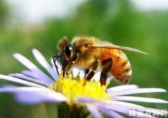 怎樣區分胡蜂、<em>馬蜂</em><em>和</em><em>黃蜂</em>