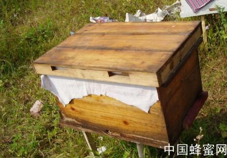 蜜蜂怎么分箱 蜜蜂分箱方法<em>技巧</em>