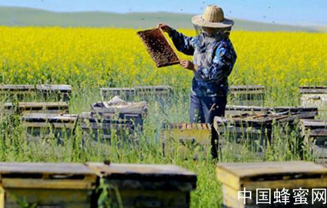 中蜂春季饲养管理知识