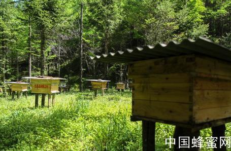 生态环境优越 大型定点养蜂基地昨在仪征捺山成立
