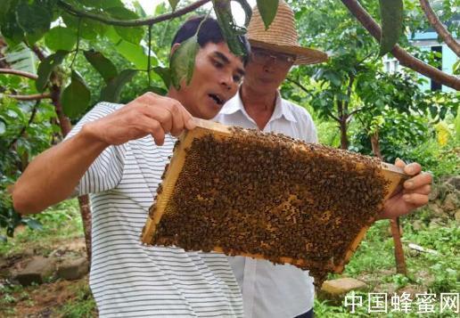 中国<em>哪个</em>地方所产的<em>蜂蜜</em>品质最<em>好</em>?