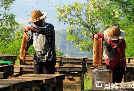 蹊跷!200多箱蜜蜂莫名死亡