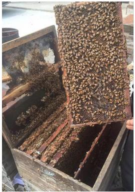 绿色环保土蜂蜂蜜养殖方法_老木顶绿色环保土蜂蜂蜜出售