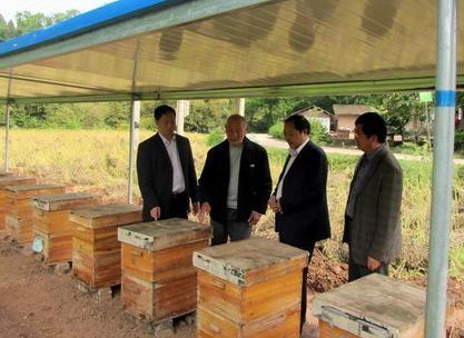 """靠养殖蜜蜂带动1283户贫困户增收,脱贫路上""""领头羊"""""""