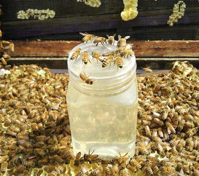 1-9 椴树蜜 天然蜂蜜批发 500克 PK 百花蜜 土蜂蜜 洋槐蜜
