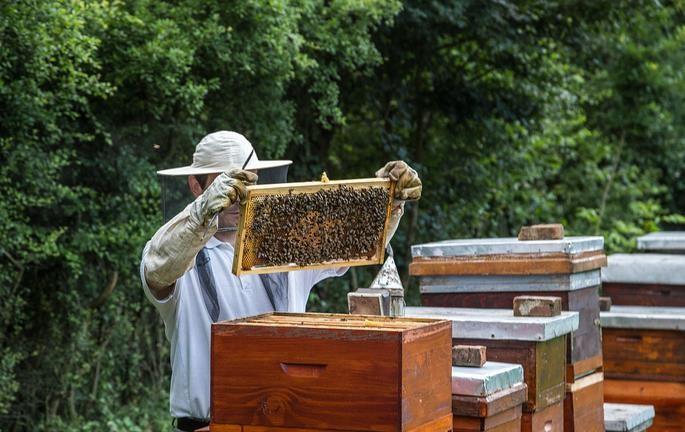 怎样让蜜蜂增产?一位<em>老<em>蜂农</em></em>根据24节气做出以下<em>养蜂</em>经验分享