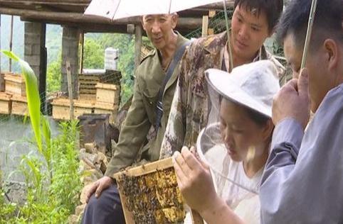<em>貢山</em>縣:保障中華蜂產業發展,創甜蜜事業