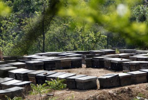 北京食药监部门对同仁堂蜂业开展调查