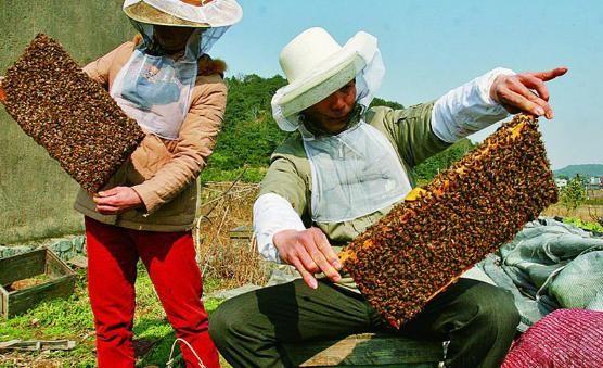 千红蜂业坚守匠心又敢求变
