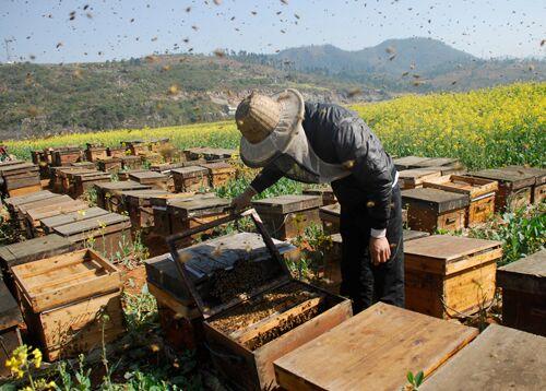 2019年养蜂前景