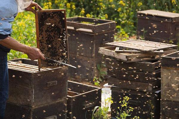 2019年养蜂赚钱吗