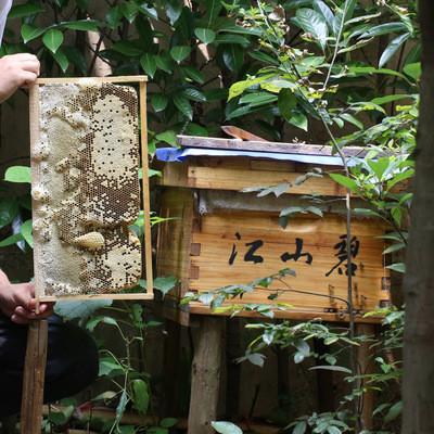 包物流运输 中蜂群 土蜂 中华蜜蜂 野蜂 含蜂王 带脾带箱 无病害