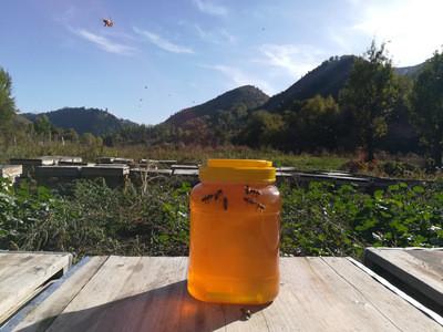 新疆伊犁黒蜂蜂蜜、山花原蜜、成熟蜂蜜 蜂农直批