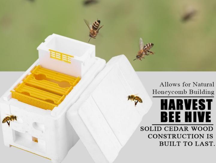 养蜂工具 泡沫蜂箱 蜜蜂交尾箱 蜜蜂育王箱 授粉箱套装出口外贸