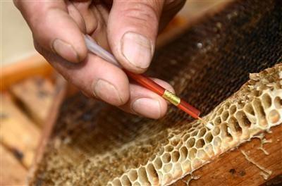 【视频】蜂群育王移虫的方法