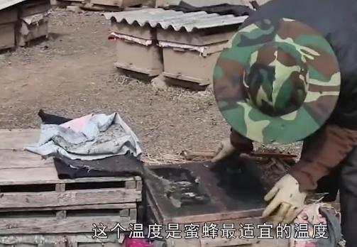 【视频】养殖蜜蜂的3个禁忌