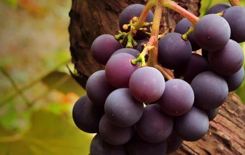 葡萄的营养价值 葡萄<em>上火</em>吗