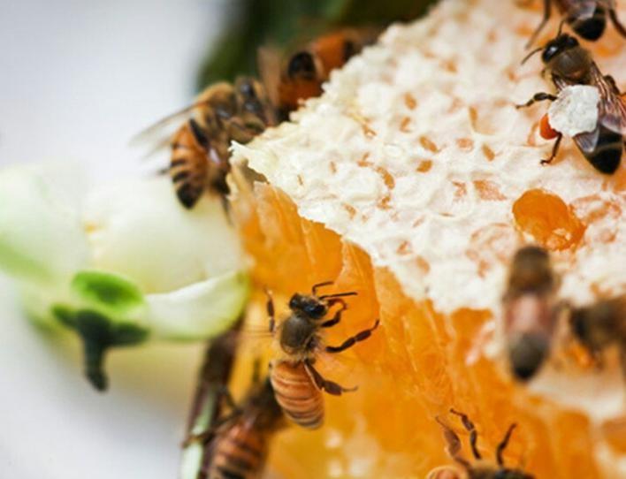 蜂巢蜜纯天然野生蜂蜜农家自产土蜂窝蜜嚼着吃蜂蜜巢蜜500g一斤装