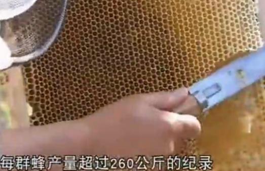【视频】一箱蜜蜂一年能产多少斤蜂蜜
