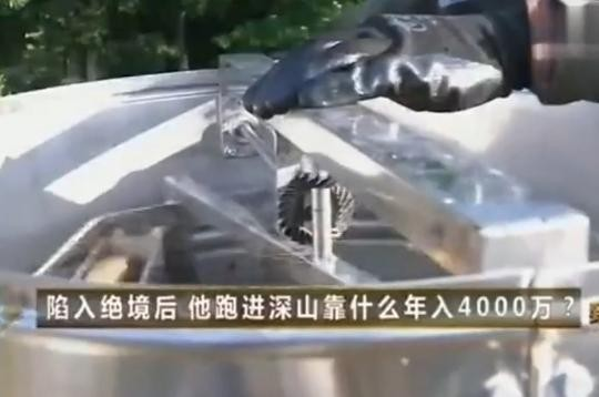 【视频】古法养殖蜜蜂,靠着蜂蜜赚大钱
