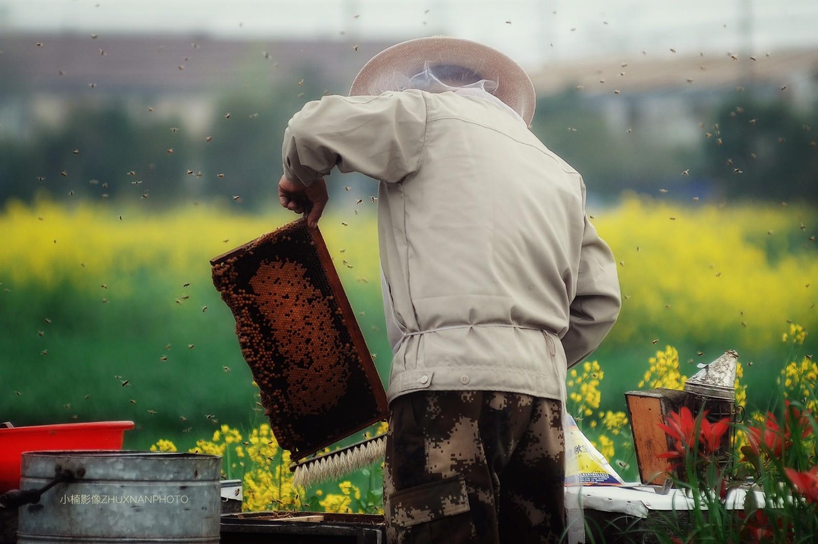 【视频】养蜂危机:蜜蜂大幅减少,养蜂后继无人
