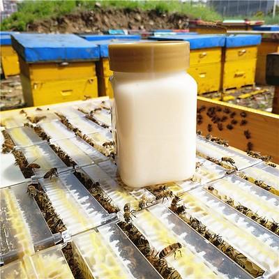 油菜花蜂蜜500g/瓶散装批发 结晶蜂蜜厂家直销批发