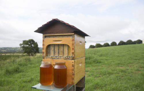 【视频】怎样取蜜更方便?附新式取蜜法