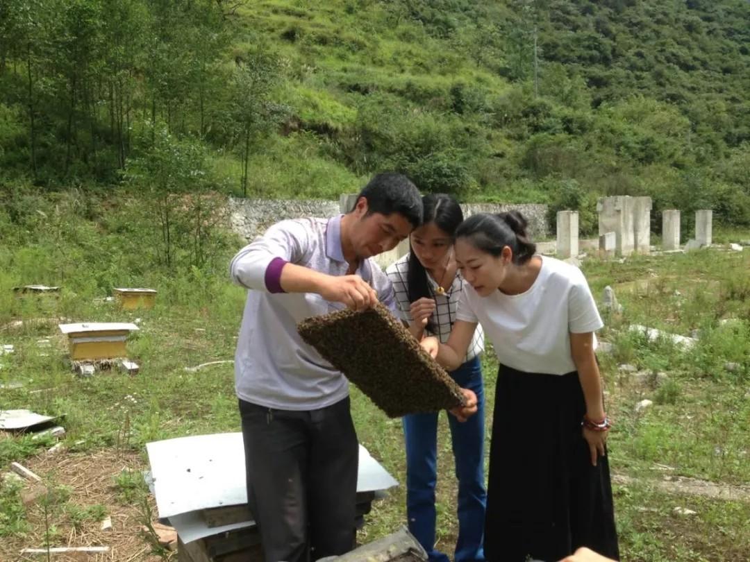 海归创业新农人王淑娟:和蜜蜂谈一次一生不变的恋爱