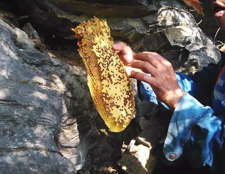 【视频】世界上最贵的蜂蜜在哪里?