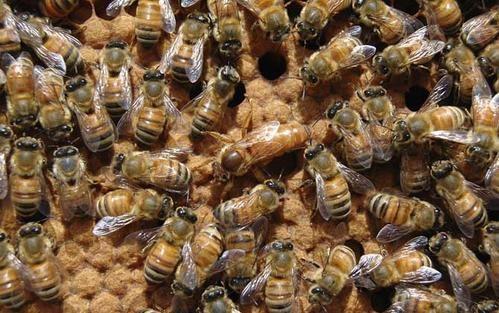 【视频】叶德华:不怕千难万难 养蜂撑起半边天
