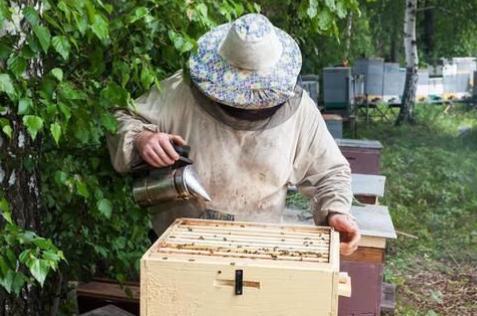 窗台上养了五箱蜜蜂