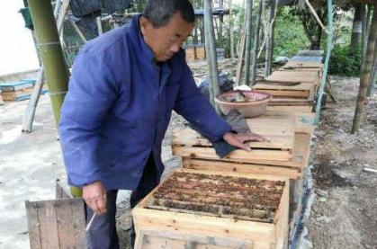 贫困户养蜂
