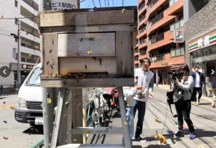 东京街头突然飞来1万只蜜蜂