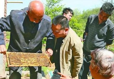 专家上门教养蜂