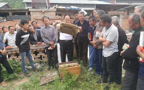 养蜂技术培训开班