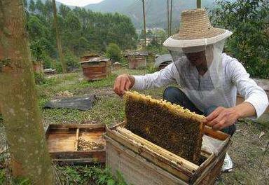 蜜蜂飞舞农家富