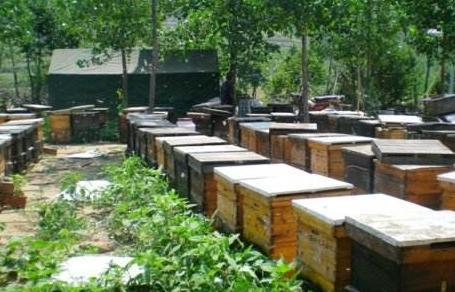 大山深处的养蜂人