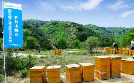 五台山蜜蜂园