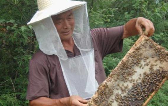养蜂的不好过