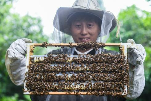 养蜂产业助民富