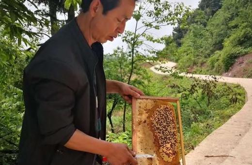 扶贫养蜜蜂