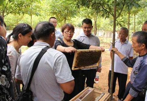 养蜂技能培训