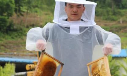 小蜜蜂 大效益